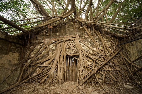Anping Tree House is sort of the Angkor Wat of Taiwan.  Basically, a couple of big Banyan trees started growing through the walls and foundations of an old store house.  Its actually pretty cool, and much more interesting than the more famous Anping Fort just across the street.