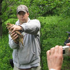 Ruffed Grouse - picture time