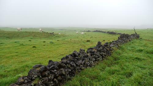Misty Hawaiian Uplands