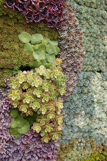 Succulent Garden's wall of goodness