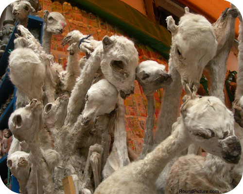 Bolivia - La Paz - Mercado de Los Brujos - Llma Foetuses - White