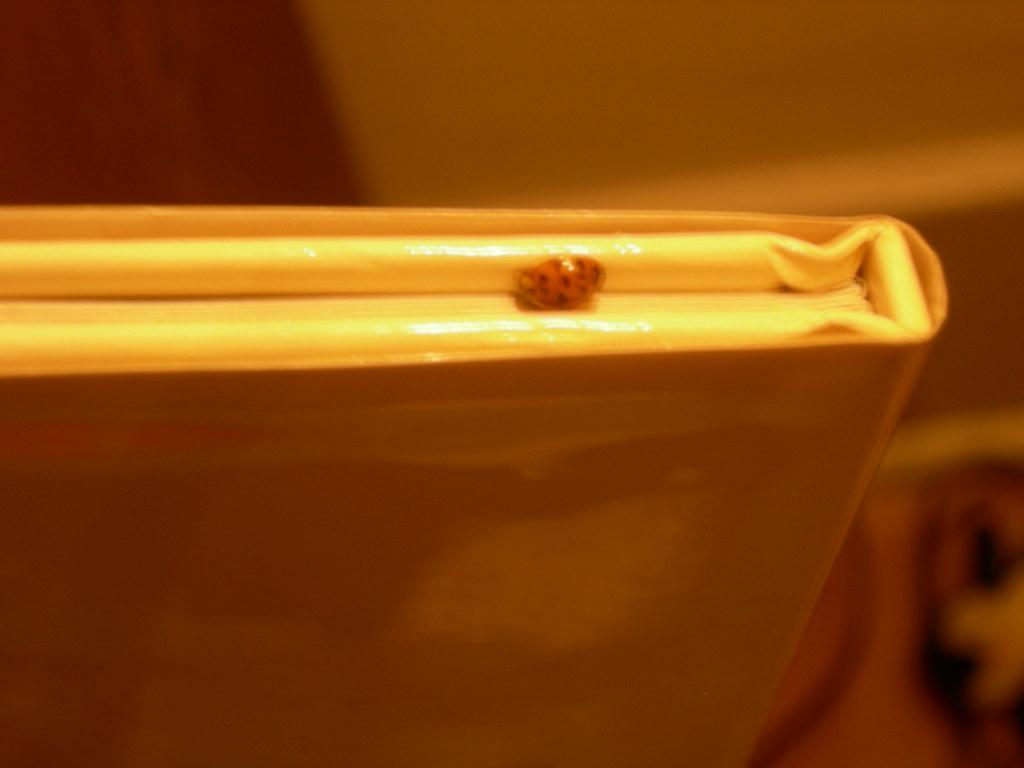 Book surprise - ladybug!