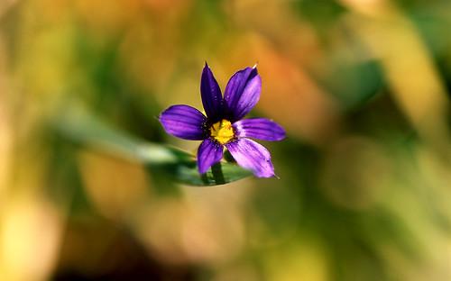 Lone Star. (Fuji Velvia 50. Nikon F100. Epson V500.)