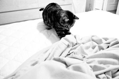 bad cat behavior, ep.3