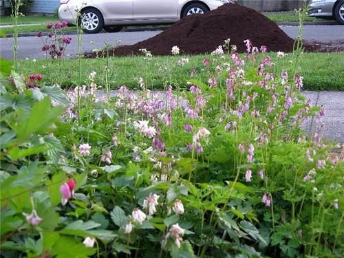 mulch pile 2