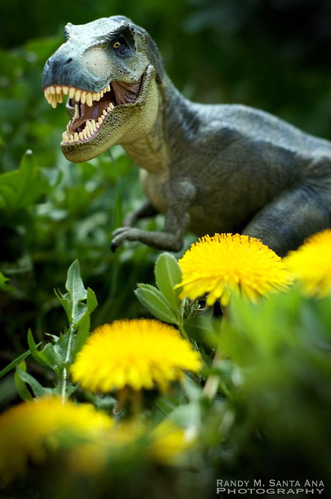 Dino In The Spring