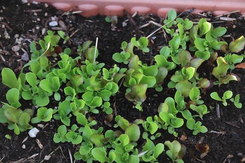Garden 6-11-2010