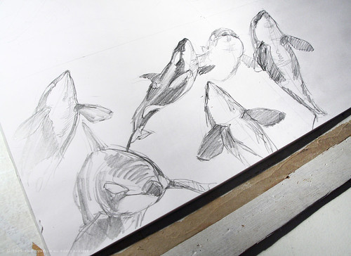 Orca sketches
