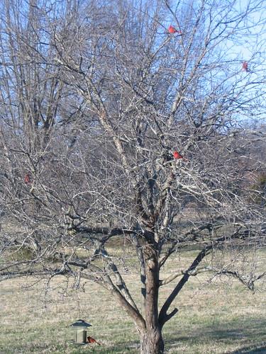 Crabtree Cardinals