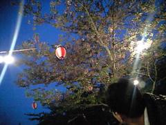 桜@道後公園での花見