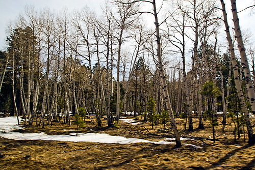 Another shot taken out of the car window. Aspens are my favorite kinds of tree - and there was snow sitting on the ground!