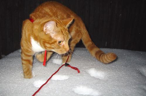 20090127 - cats vs. snow - 175-7594 - Lemonjello