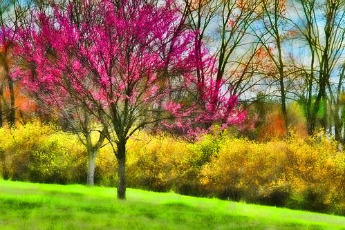 When Spring Sings