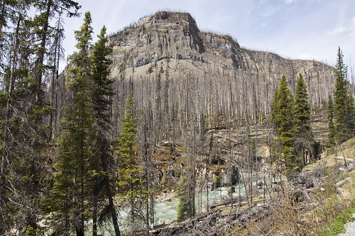 Result of the Fire in Kootenay near the North Entrance of the Park