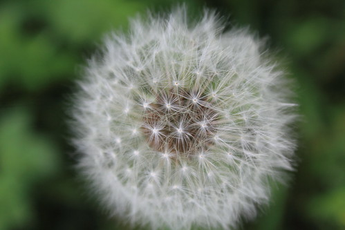 A14 - Breaking the Rule of Thirds - Dandylion Seeds
