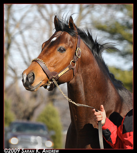 Love Of Money at Northview Stallion Station (PA)