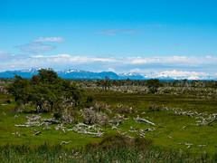 Die Fahrt nach Puerto Natales ist abwechslungsreich