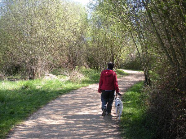 Foto 5 - Camino entre árboles