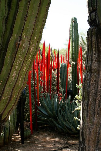 Red spears framed by saguaro.