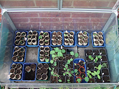 cold frame. the loo roll tubes mostly have sweetpeas in, with a few that have broadbeans in. Im waiting for the broadies to germinate, and the sweetpeas to get a lil bigger before nipping out the tips (to make them get bushier) and plant them out. Also in there are geraniums, nasturtiums, courgettes and some herbs.