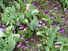 Garden of Aton 2009 - 55