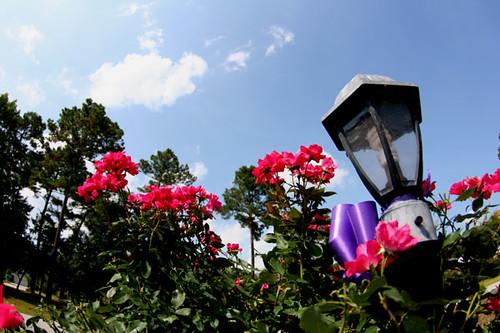 lightpost bloom