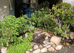 spot for planting public fruit tree