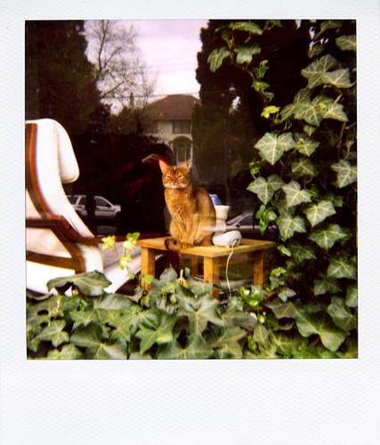 'roid week 2009: Maggie keeps an eye on the neighbourhood