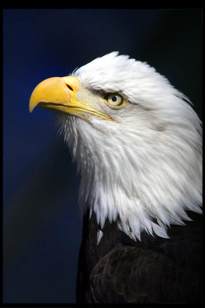 eagle at bear mountain