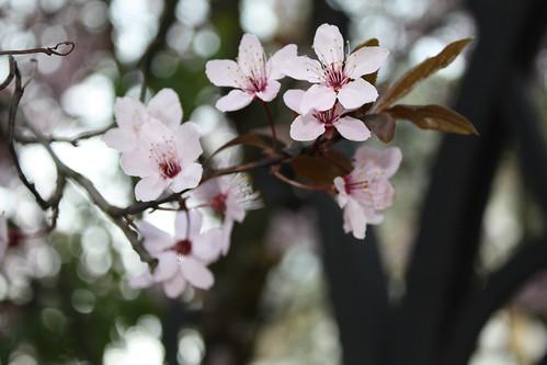 FlowerWalk