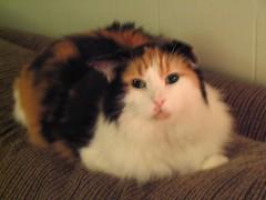 Alexandra ~February 1990 - May 27, 2009