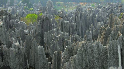 Shi Lin Landscape