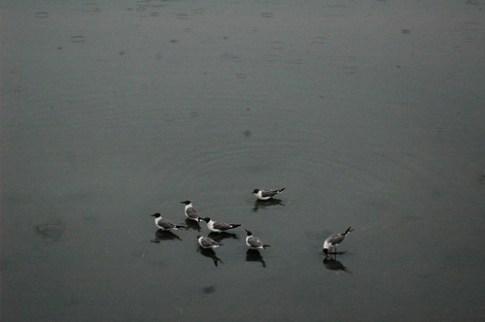 Birds at Chincoteague