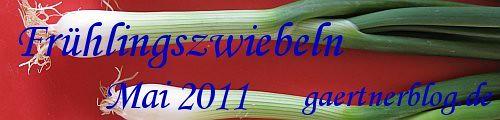 Garten-Koch-Event Mai 2011: Frühlingszwiebel [31.05.2011]