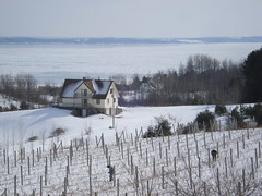 Frozen Bay, Pruning Vines