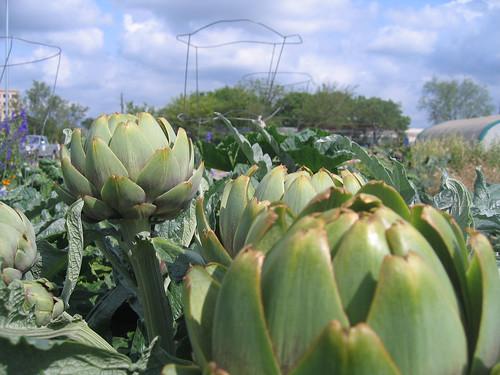 Sunshine Community Garden Austin