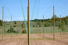 Empire Hops Farm