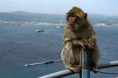 San+Roque+%28al+fondo%2C+Gibraltar%29