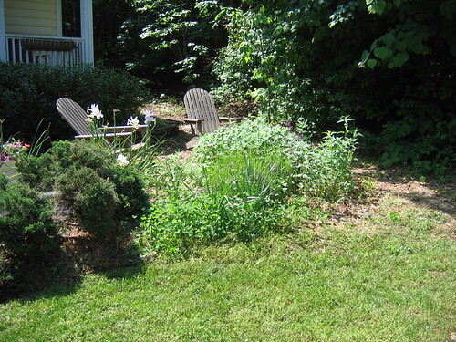 The herb circle, already going crazy with returning perennials.