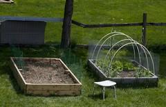 2009 Vegetable Garden Boxes