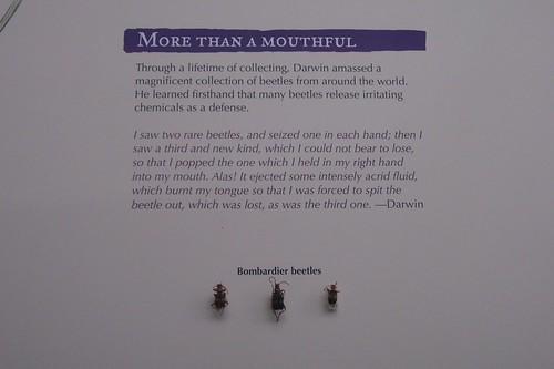 New Charles Darwin exhibit--my favorite part