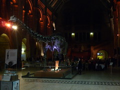 V&A and Natural History Museum Lates (20)