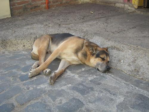 A stray takes a power nap mid day in Valparaiso