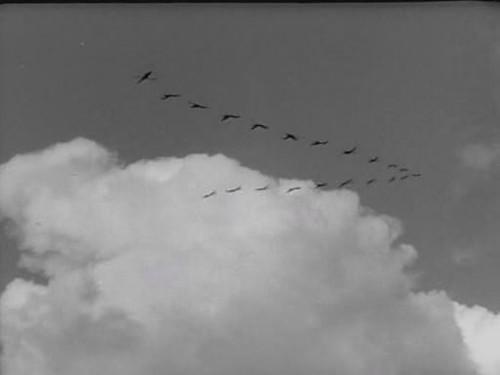Quando volano le cicogne