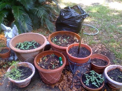 our little patio garden