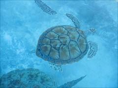 Tortugranja, Isla Mujeres