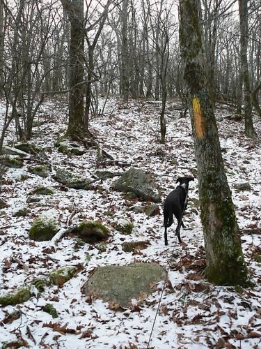 Bear Cliffs - Jimmie on Snowy Trail