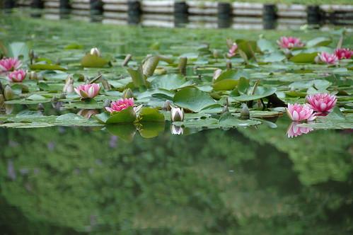 Heian Jingu Shrine reflections Kyoto