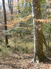 Merchant's Millpond State Park - Colors Off Lassister Trail