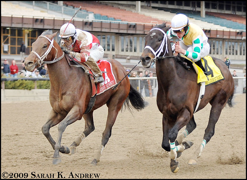 Kodiak Kowboy outduels Fabulous Strike in the Grade 1 Carter Handicap